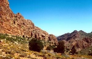 Station écorchée à C. allardi estherae des Ida-ou-Gnidif, Anti-Atlas sud-occidental