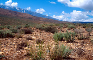 Biotope tabulaire au nord du Djebel Ayachi, Haut Atlas oriental