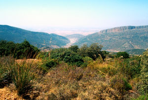 Biotope, Monts de Beni Snassen, Atlas Tellien