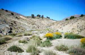 Biotope, Tizi-n-Talhremt, Haut Atlas oriental