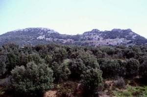 Chênaie verte au Djebel Tazzeka, Moyen Atlas septentrional
