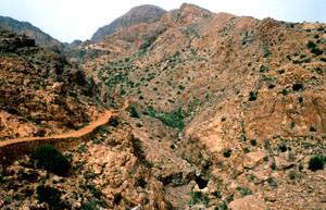 Espace de vol à ssp. harterti, Djebel Lekst, Anti-Atlas sud-occidental