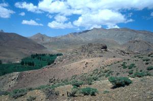 Site de hilltopping des mâles de la ssp. beraberensis, Imilchil, Haut Atlas central