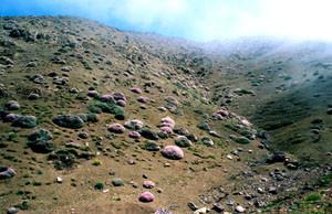 Biotope, Tizi-n-Tichka, Haut Atlas central