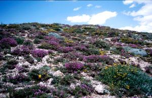Espace nectarifère, Tzi-n-Tretten, Moyen Atlas central