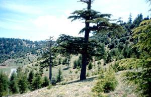 Habitat de la ssp. weissi, Col du Zad, Moyen Atlas central