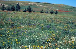 Biotope, Plateau d'Ito, Moyen Atlas central