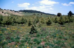 Habitat tabulaire de ssp. gibrati, Plateau d'Ito, Moyen Atlas central