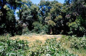 Ripisylve à ssp. lyauteyi, Oued Tizguid, Moyen Atlas central