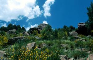 Aspect du biotope, Adrar Tizerag, Haut Atlas central