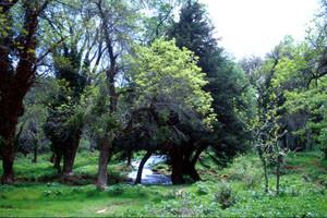Biotope dans le Val d'Ifrane, Moyen Atlas central