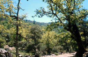 Biotope rifain, Djebel Lakraa, Rif occidental