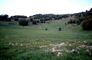 Biotope du Moyen Atlas, Ousmaa