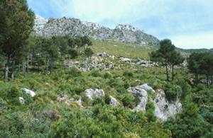 Biotope, Djebel Ben Karriche, Rif occidental