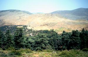 Biotope atlasique, Djebel Bou-Iblane, Moyen Atlas septentrional