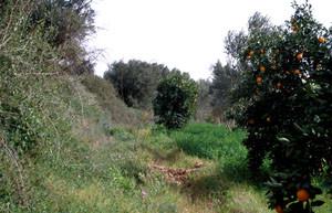 Niche en verger, Taroudannt, Vallée du Souss