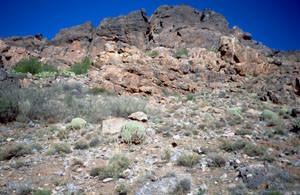 Biotope en falaise, Tizi-M'lil, Anti-Atlas sud-occidental