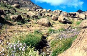 Biotope, Djebel Siroua, Anti-Atlas nord-oriental
