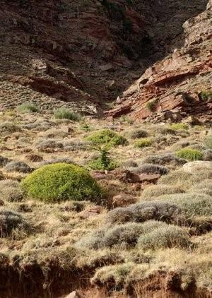 Aspect du biotope à l'Adrar Tizerag