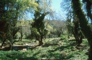 Autre aspect du biotope à Ifrane