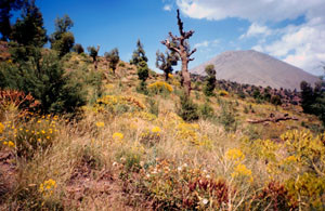 Biotope, Djebel Azourki, Haut Atlas central