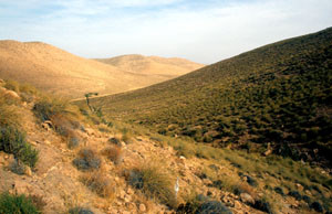 Habitat à ssp. tlemceni, région de Djerada, Atlas Tellien