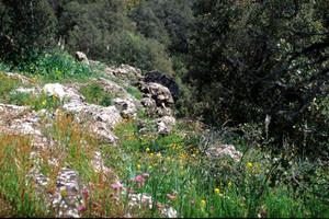 Niche écologique de C. rubi, Source Vittel, Moyen Atlas central