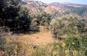 Niche écologique, Pays des Beni-Routen, Rif occidental
