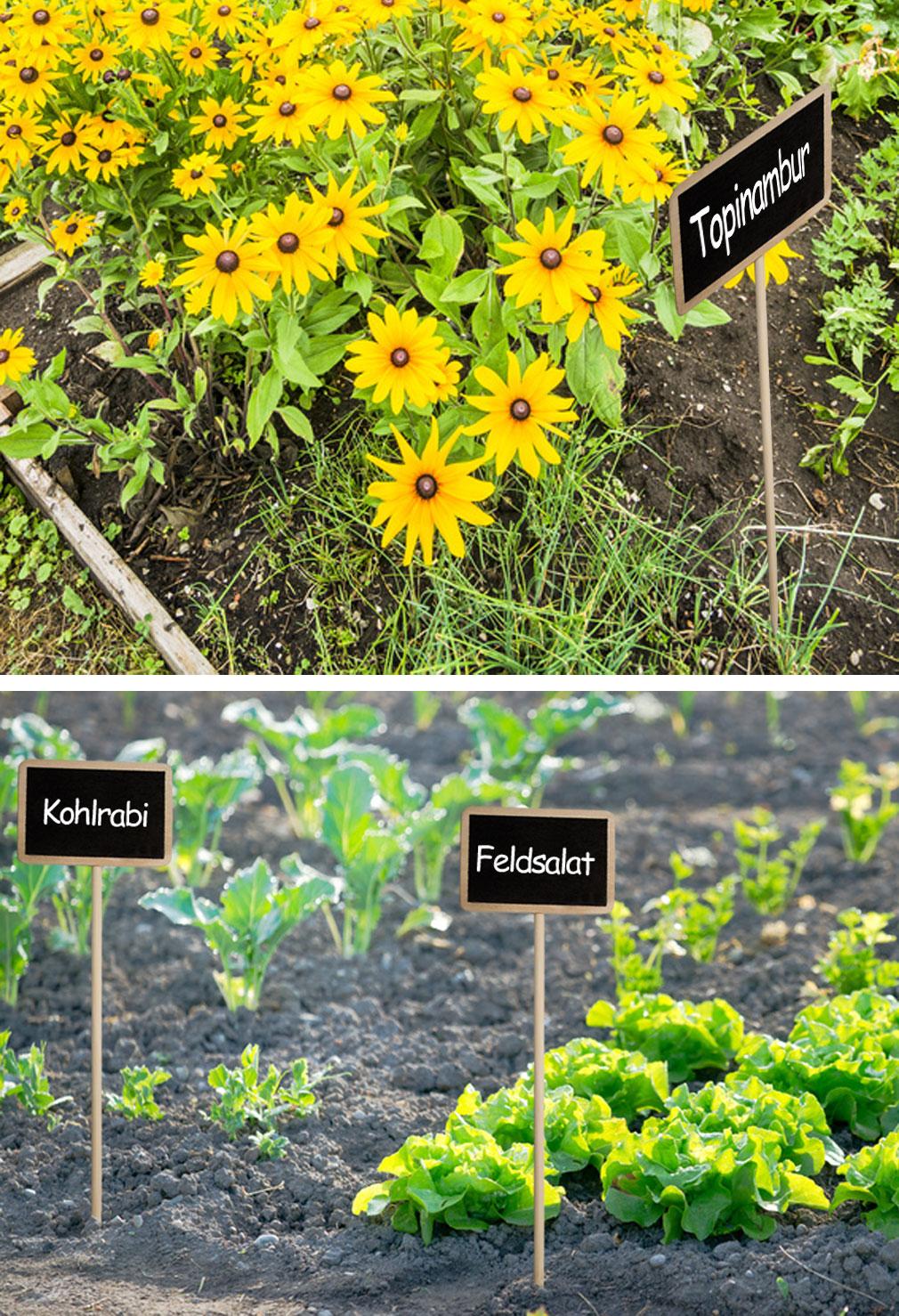 Garten und pflanzen hometools eus webseite for Garten und pflanzen