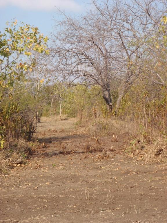 Piste ouverte dans le bush, Mwabi Game Reserve, Bangula, Malawi