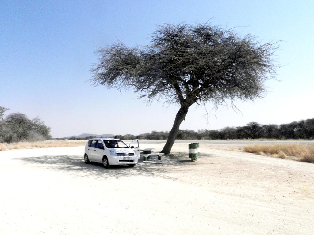Pause à l'ombre aux alentours de Windhoek, Namibie