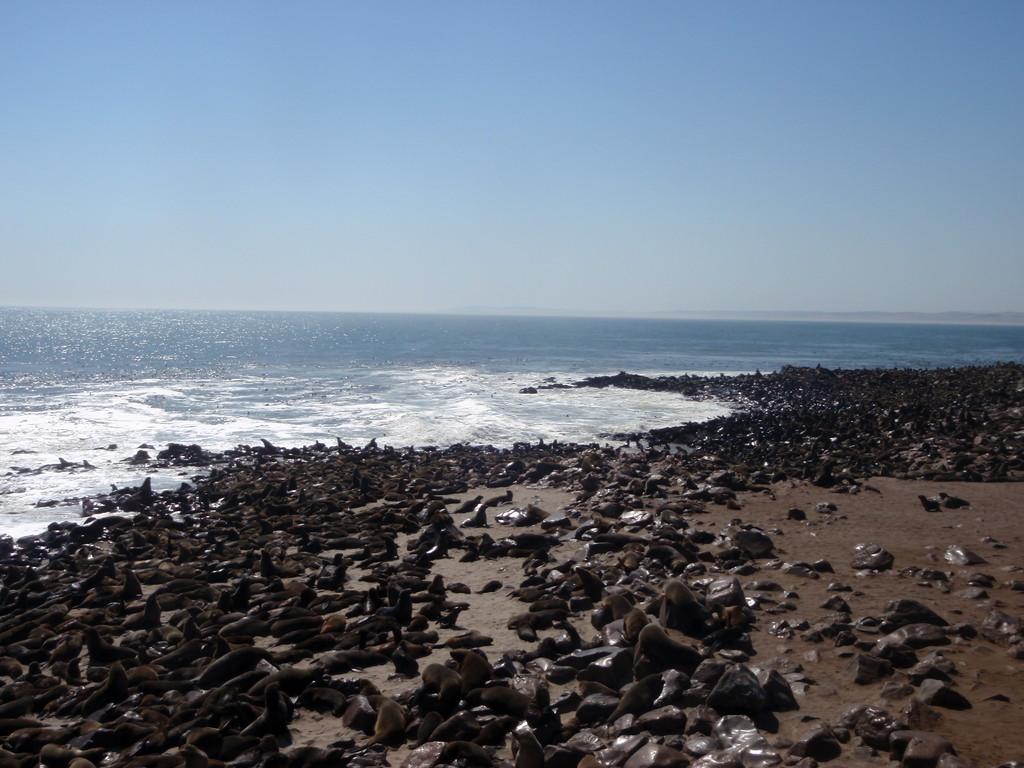 Colonie de phoques, Diaz Point, Namibie