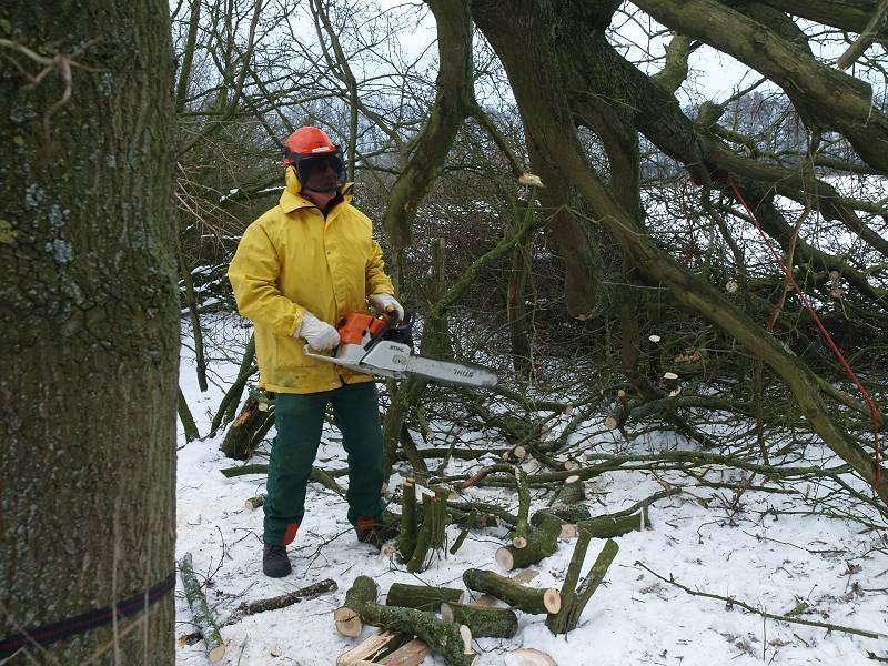 Gewinnung von Holz für die Totholzmauer