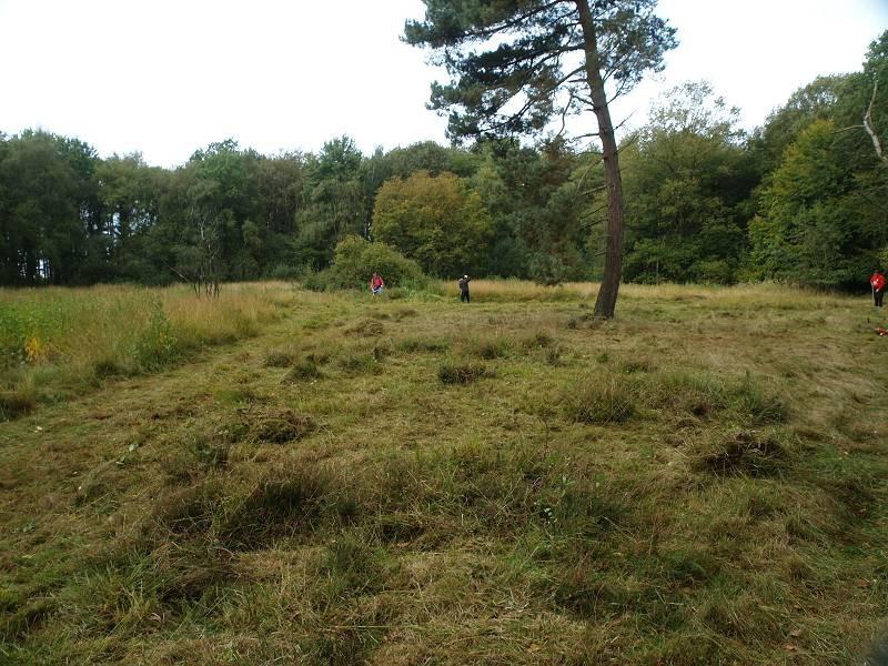 Pflege der offenen Wiesen- und Heideflächen