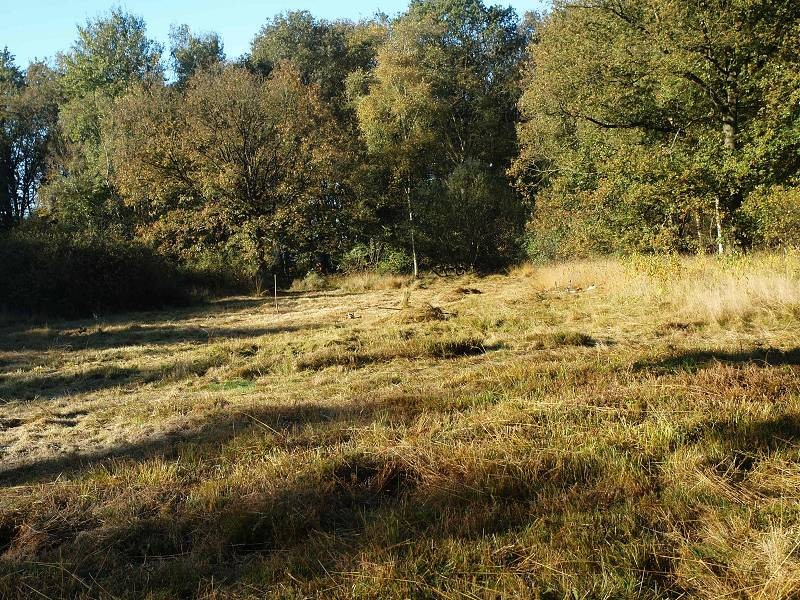 Pflege des Gebietes von ca. 7000 m²