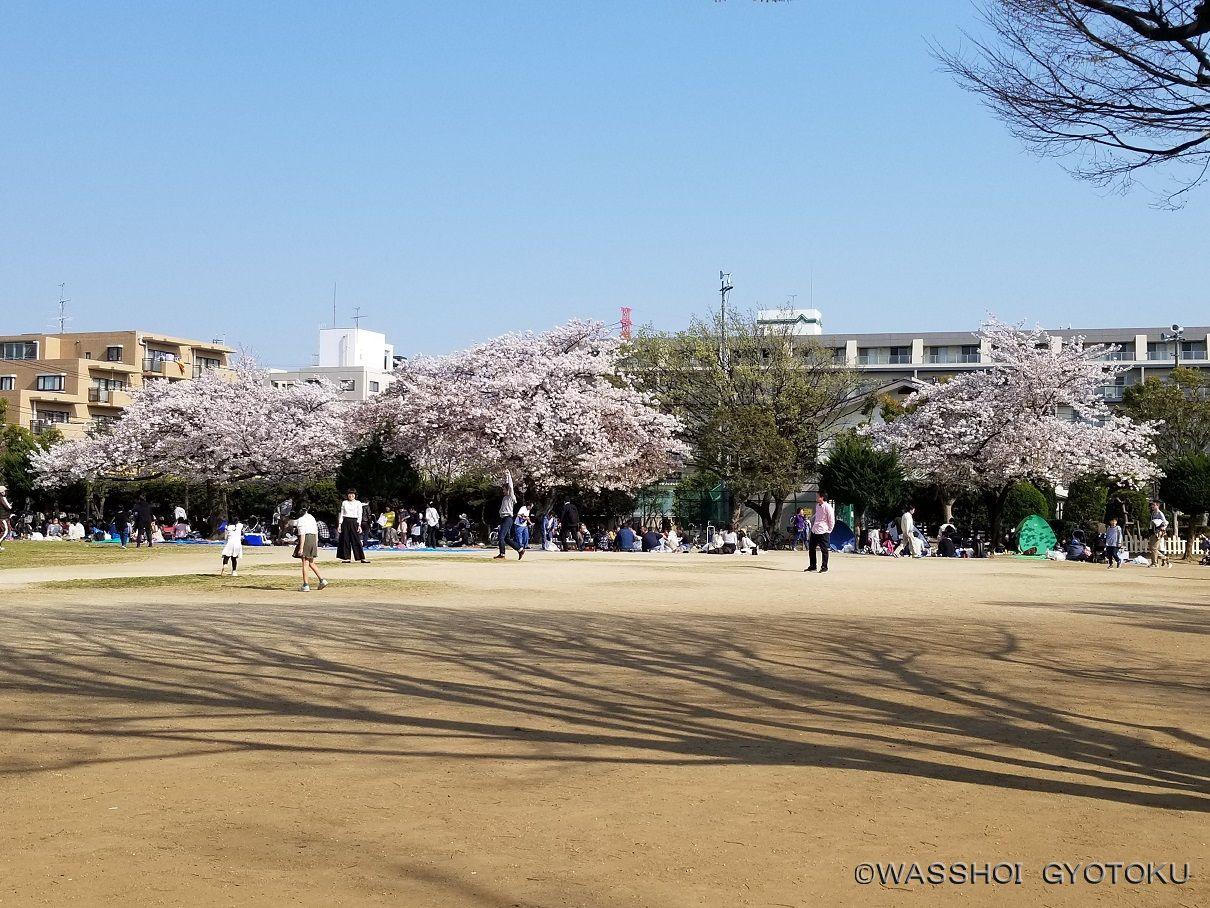 春は桜が咲き