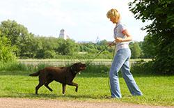 Hundeschule Dresden, Großenhain, Ortrand