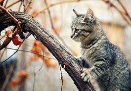 Vétérinaire petits animaux