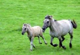 Vétérinaire chevaux