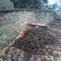 Die wild gewachsenen Bäume an der Außenmauer sind nun Geschichte