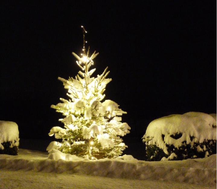 Tief verschneiter Weihnachtsbaum am Georgihof