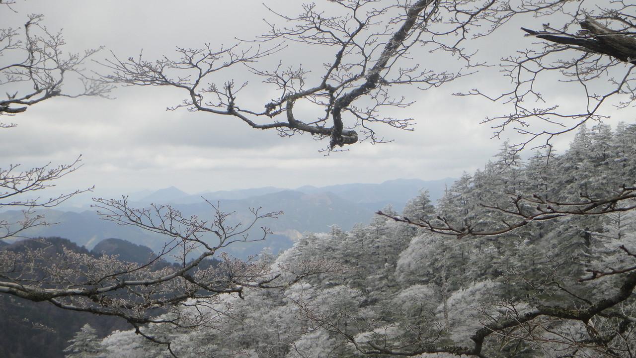 5月1日にできためずらしい樹氷 今年の気候は気まぐれです              2013.5