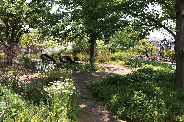 ハーブガーデン『生活の木薬香草園』