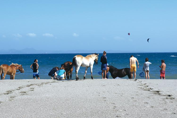 三浦海岸で楽しむ乗馬体験