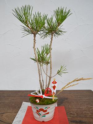 正月用の飾り盆栽