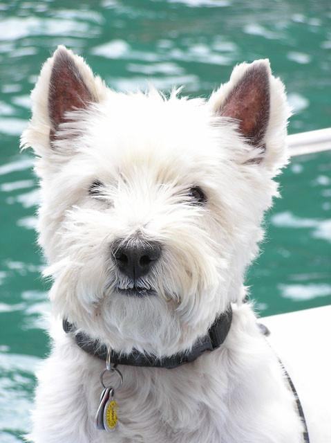 Nicky  beim Schiffles fahren