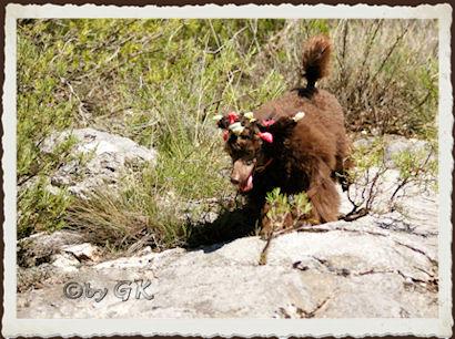 14.09.2010  seltenes Tierchen in den Bergen gesichtet : ein Papilotten-Wuselchen :-)))