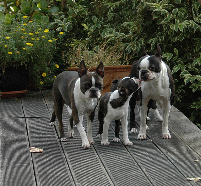 Dandy mit Sohn Benji und Mama Nelly