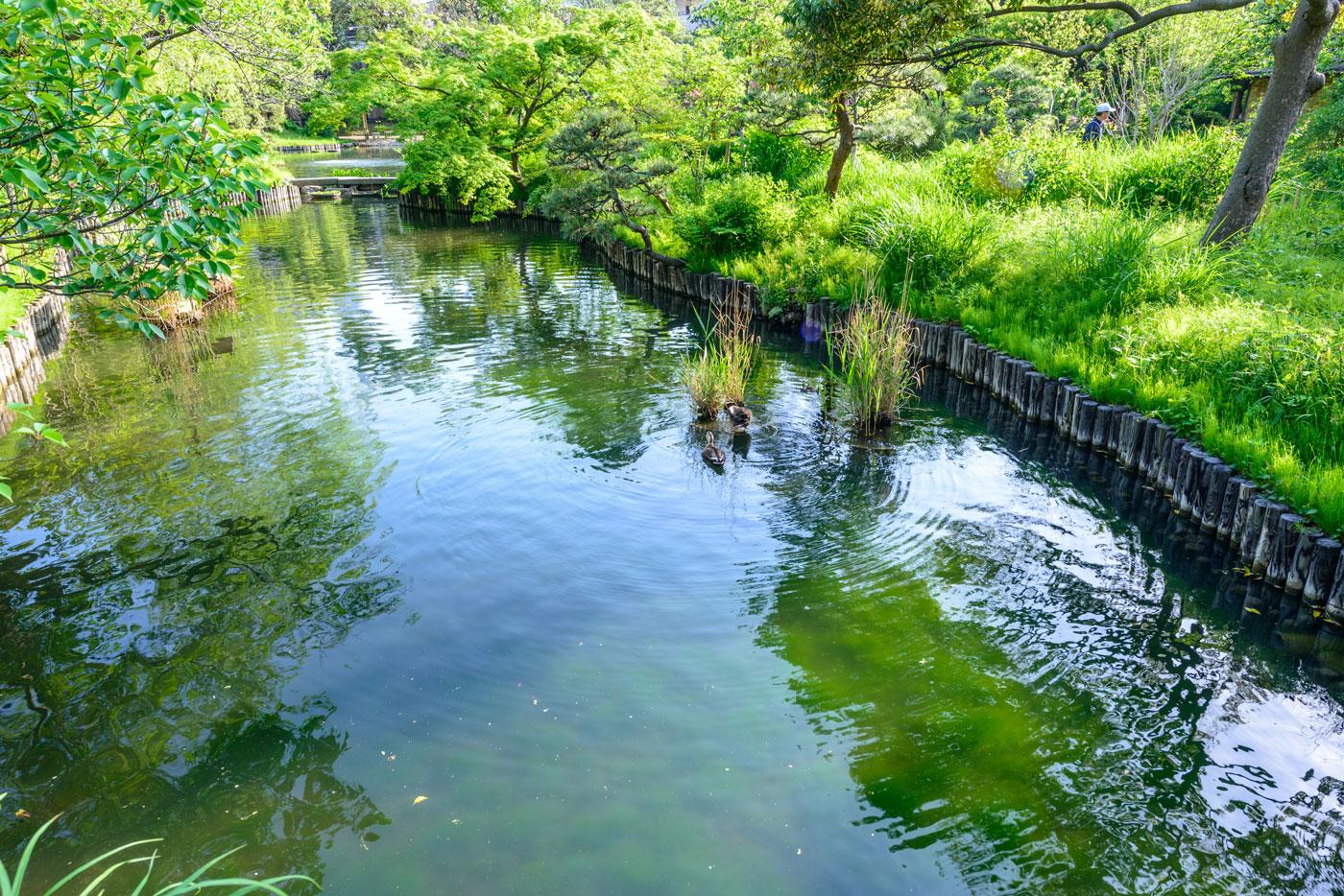 都立向島百花園4(これから花しょうぶやあやめが色とりどりに咲き誇ります)