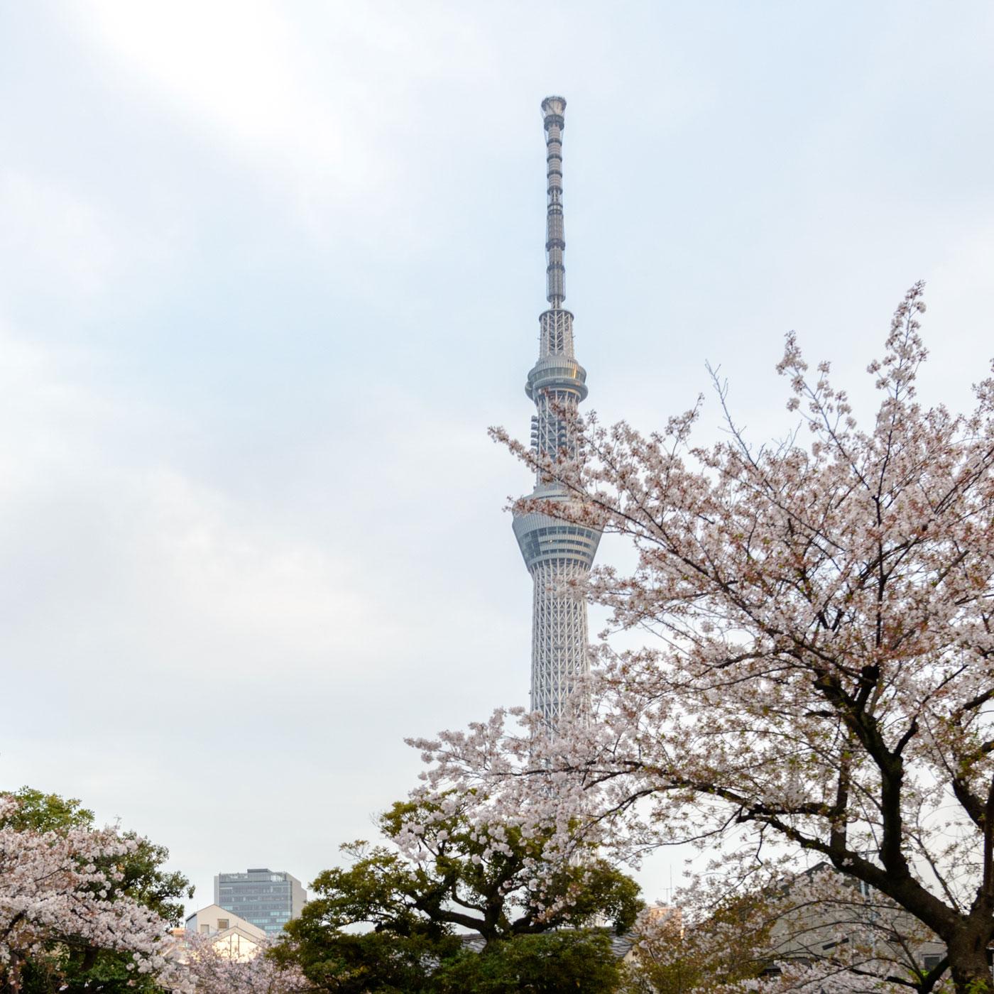 老舗「言問団子」よりみる東京スカイツリー(1,500m)